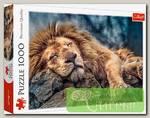 'Trefl' Пазл 1000 элемент. 'Спящий лев'