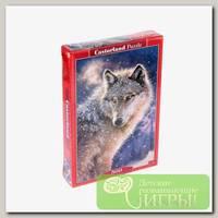 'Castorland' Пазл 500 элемент. Одинокий волк