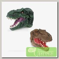 'NEW CANNA' Рукозавр 'Тираннозавр'